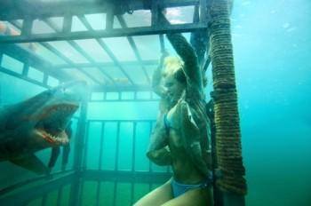 shark and sarah paxton