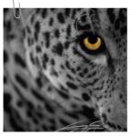 le0pard13   Gravatar Profile